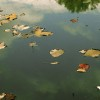 The Pastel Pond
